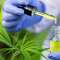 The Best Quality CBD Oil Products.
