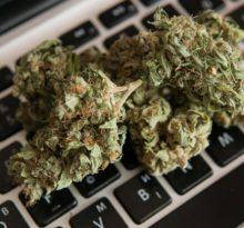 buy the weeds online