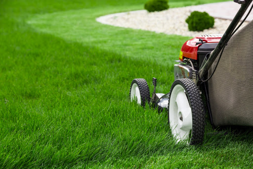 Tips for Landscaping the Yard