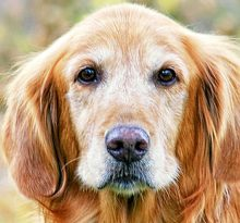 Treat Cancer in Dogs